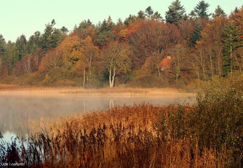 Efterår ved hampen sø