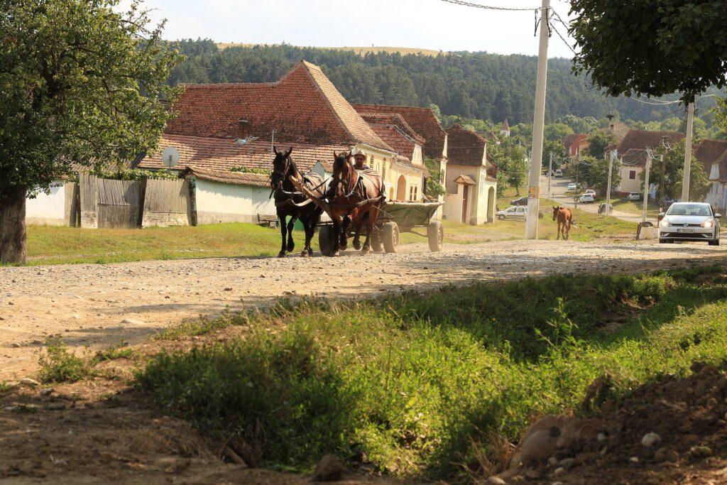 hestevogn rumænien rejse fattig gypsy