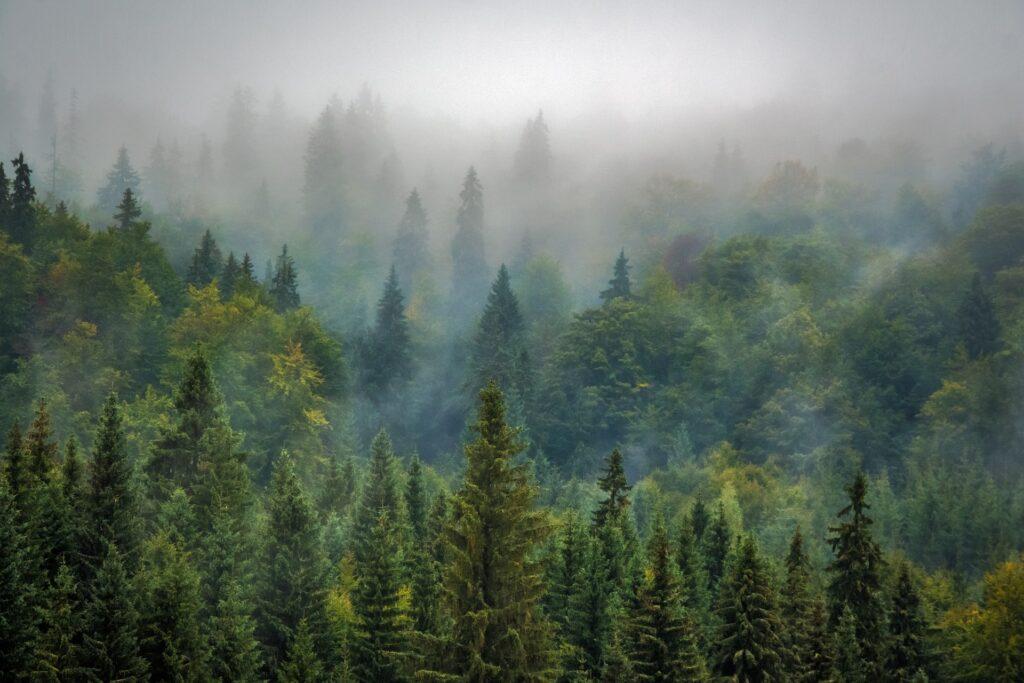 romania rumænien forest skov rejse